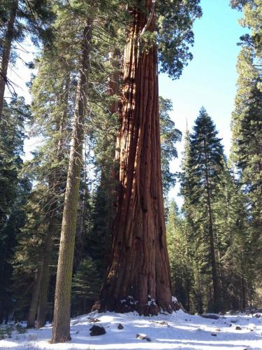Forêt nationale des Sequoias, Californie