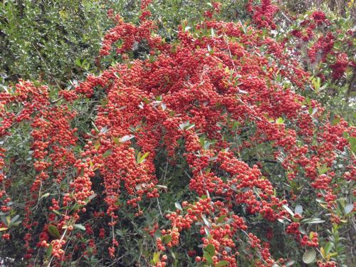 plantation Magnolia