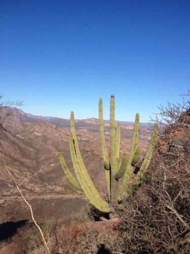 San Carlos - sommet de Tetakawi, Sonora