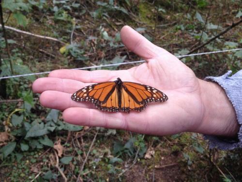 Biosphère des papillons Monarque, Michoacan